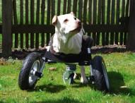 Multec entwickelt einen Rollstuhl aus dem 3D-Drucker für Hündin ohne Vorderbeine