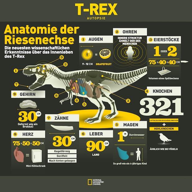 """Photo of """"Dino Week"""" ab 7. Juni auf spektakuläre Reise ins Reich der Urzeitgiganten"""