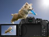 LUMIX G70: ein tierisch gutes Fotovergnügen